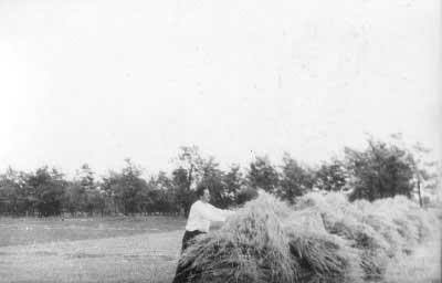 betakarítás_a_mai_faluközpont_helyén_1940-es_évek