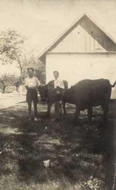 bivalyok_1930-as_évek